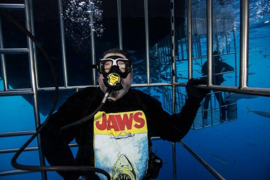 Dirk shark diving in Guadaluoe, mexico
