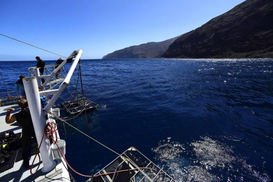 Shark diving operations, Nautilus Belle Amie, Guadalupe, Mexico